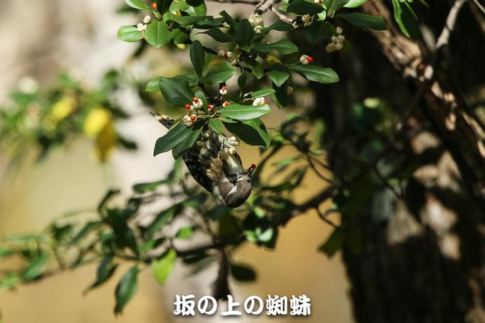 07-E1DX6363-2-Edit-LR1.jpg