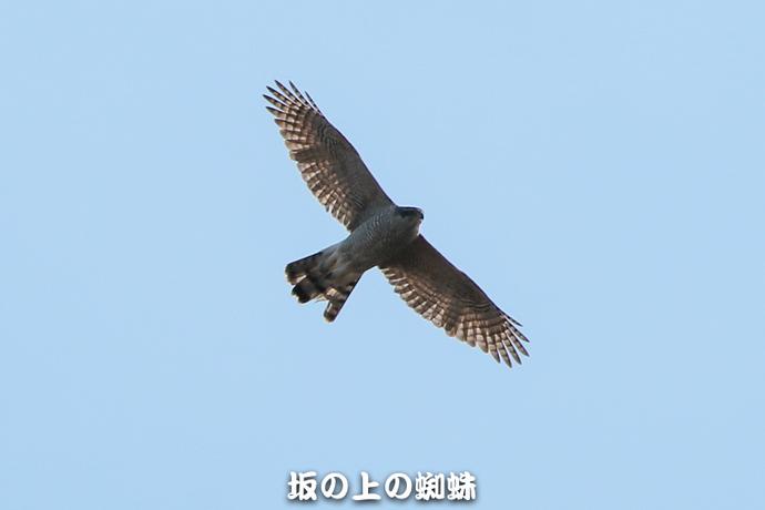 07-E1DX9713-LR.jpg