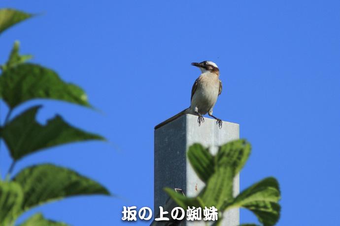 07-IMG_5381-LR-2-LR.jpg