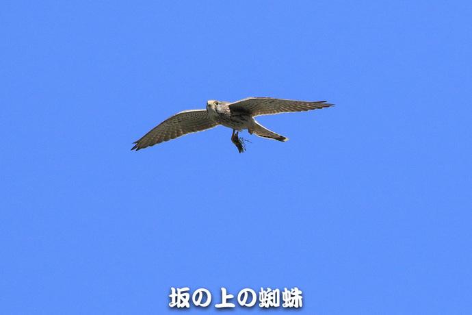 07-TACK3340.jpg