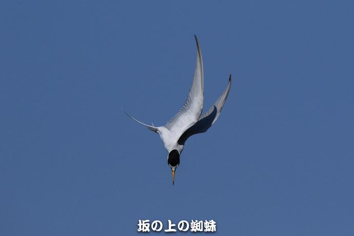 07-TACK7984-2LR-1.jpg