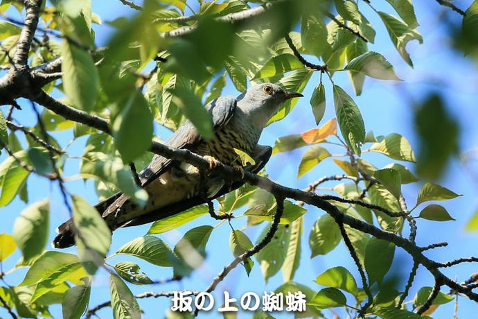 08-E1DX0510-2-LR.jpg