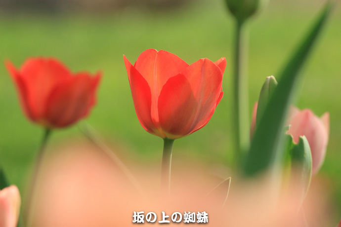 08-EO7D7251-2LR-1.jpg