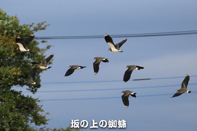 08-TACK9784-LR.jpg