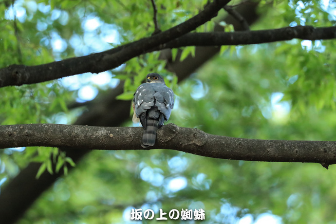 09-E1DX7959LR-1.jpg