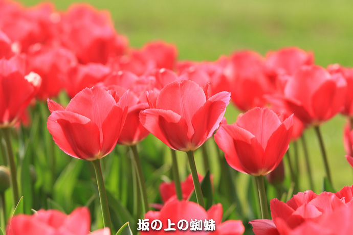 09-EO7D7255-2LR-1.jpg