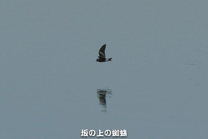 09-TACK1416-2-EditLR-1.jpg