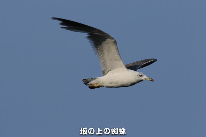 09-TACK2271-2LR-1.jpg