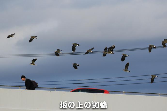 09-TACK9787-LR.jpg