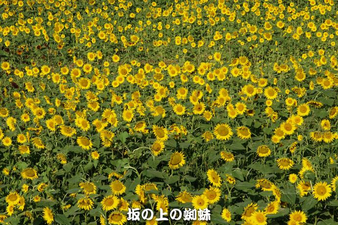 10-DSC03079-LR.jpg