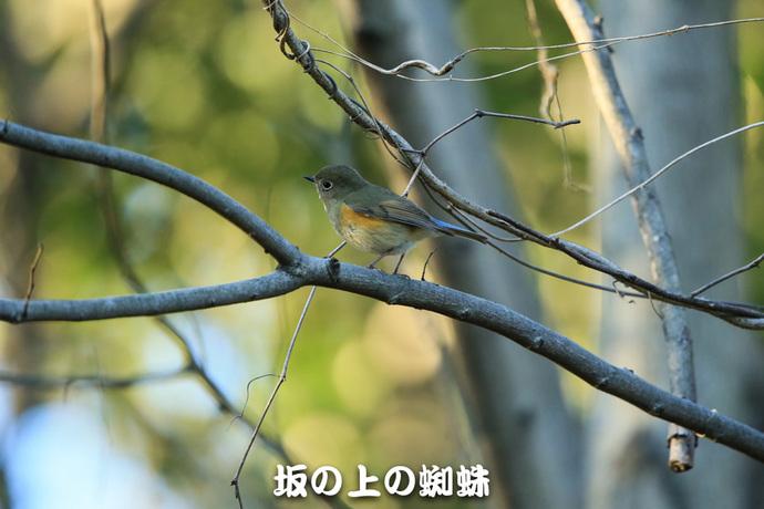 10-E1DX0750-LR1.jpg