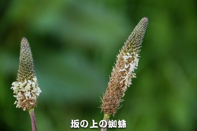 10-IMG_7289-2-LR.jpg