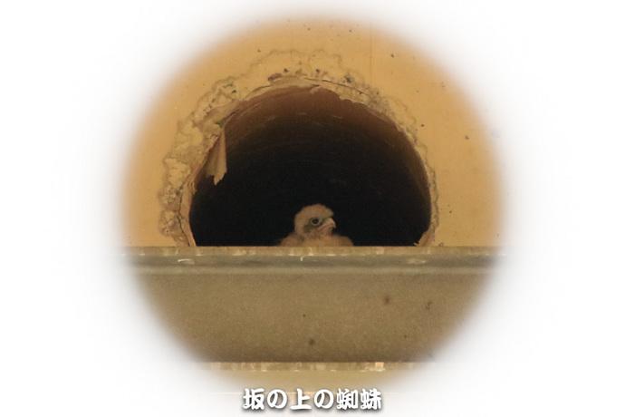 10-TACK0167-2LR-1.jpg