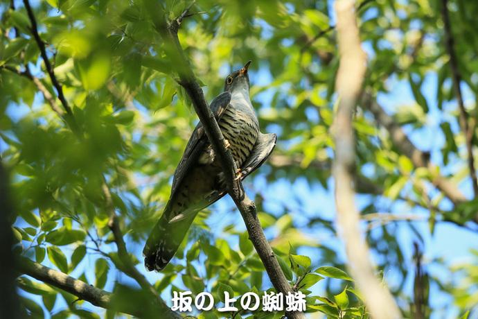 11-E1DX0865-2-LR.jpg
