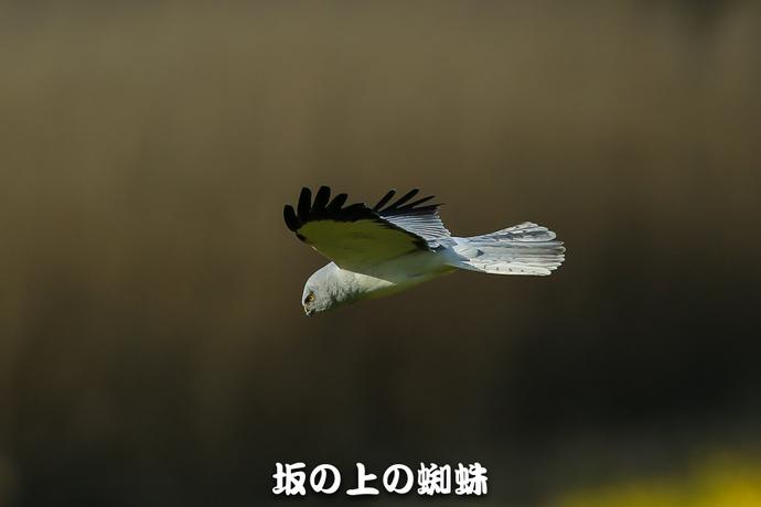 11-E1DX9259-2-LR.jpg