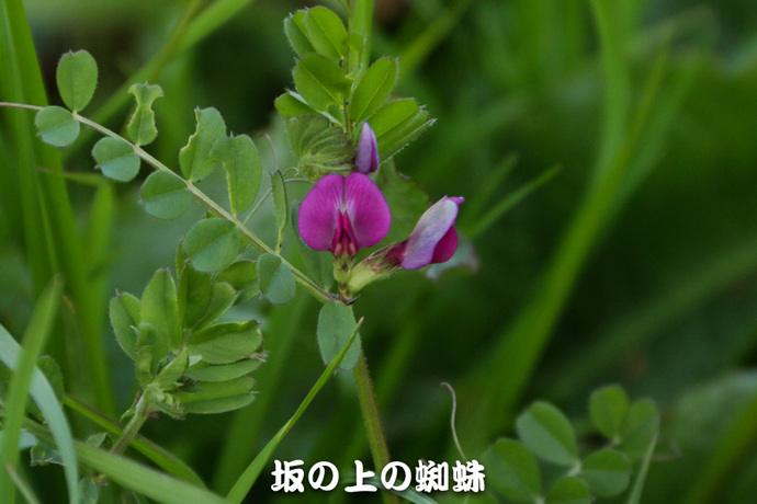 11-IMG_7296-2-LR.jpg