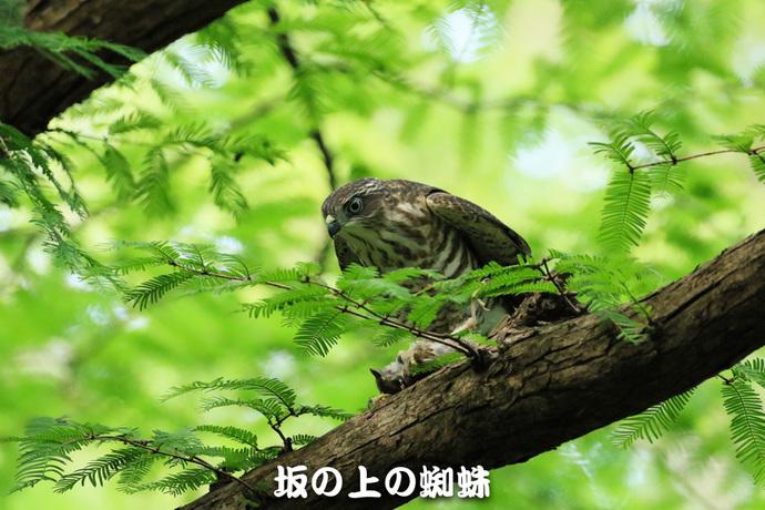 11-TACK8619-2-Edit-LR.jpg