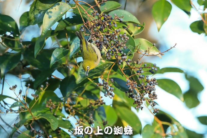 12-E1DX0884-LR1.jpg