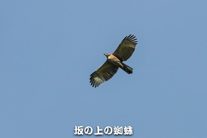 12-TACK0438.jpg