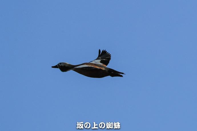 14-E1DX3364-2LR-1.jpg