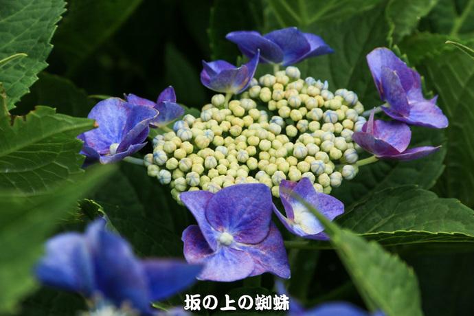 14-IMG_0850-2LR-1.jpg