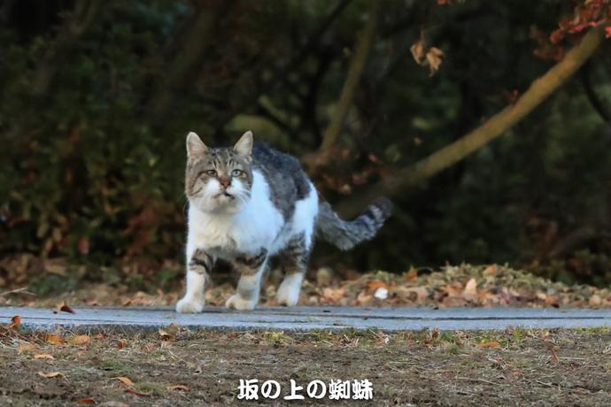15-TACK4619-2LR-1.jpg
