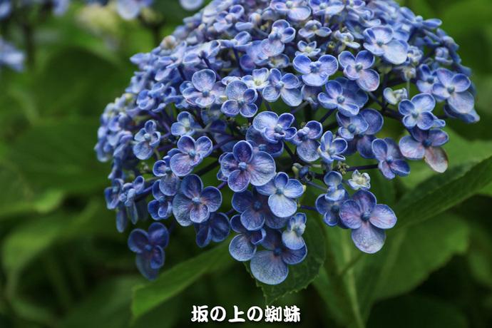 16-IMG_0874-2LR-1.jpg