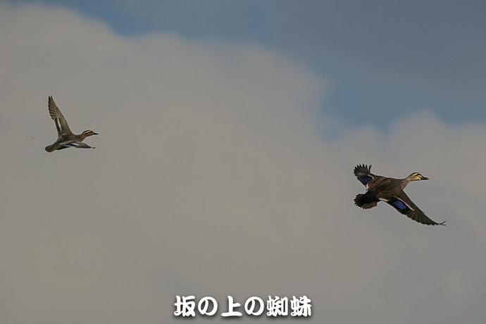 27-E1DX0696-3-LR.jpg