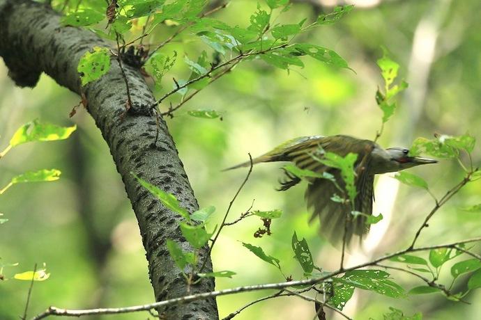 巣に向かって飛び立つ瞬間。