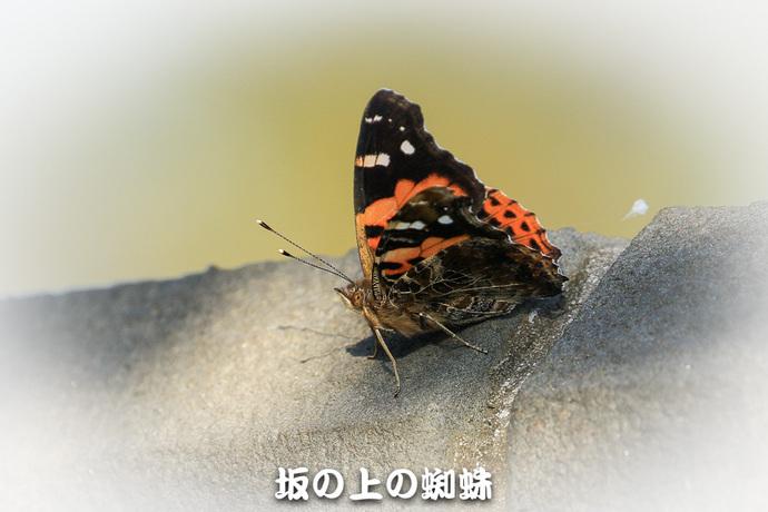 TACK1543-2-Edit-LR-2.jpg