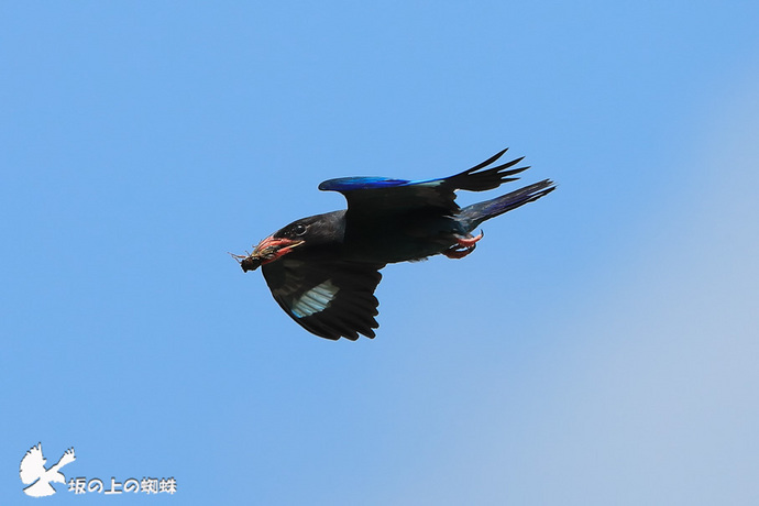 01-E1DX1338-青空バックトリム大.jpg