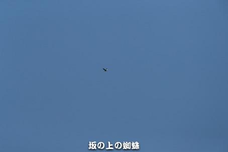 01-E1DX6903-2LR-1-3.jpg