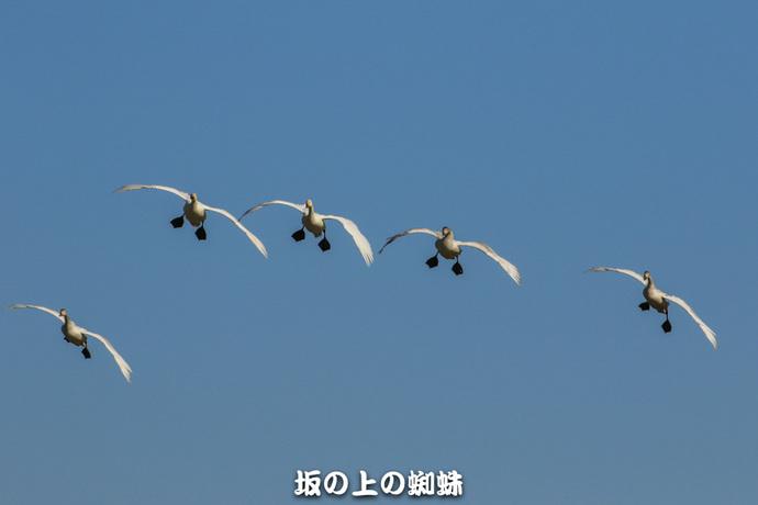 01-EO7D0692-2LR-1.jpg