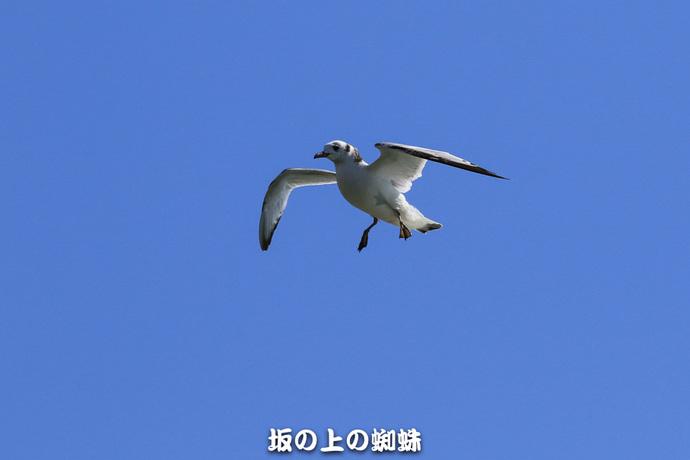 01-EO7D1461-2LR-1.jpg
