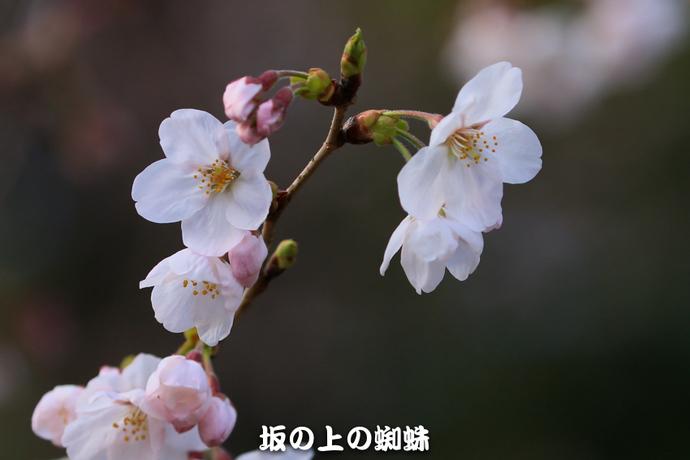01-IMG_1543-LR.jpg