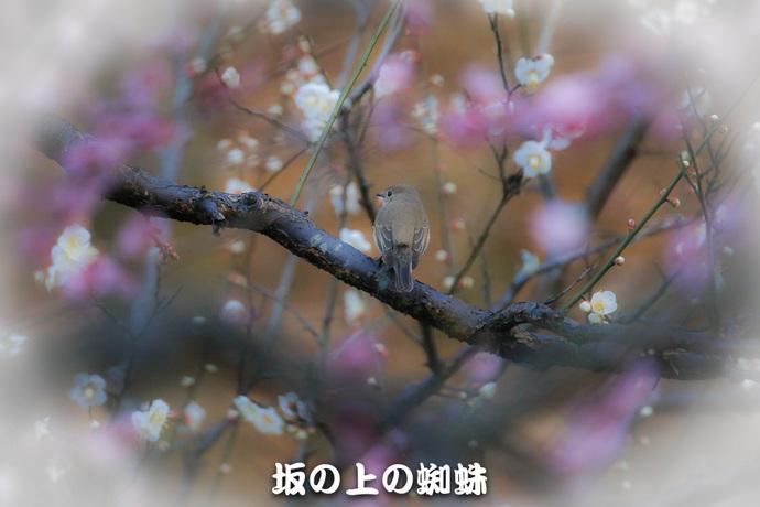 01-TACK1304.jpg