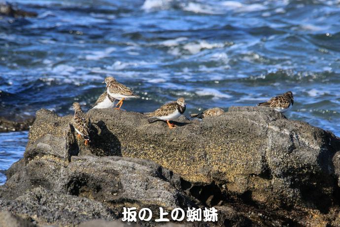 01-TACK4652-2LR-1.jpg