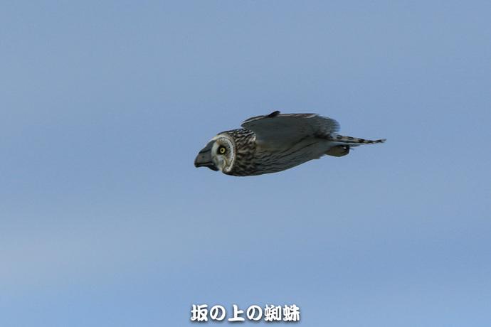 01-TACK5365-2LR-1.jpg