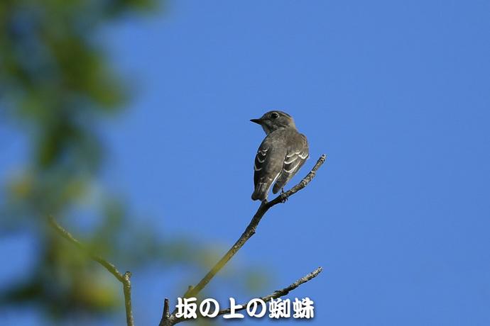 02-E1DX4650.jpg