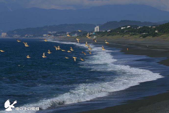 02-EO7D0223海岸とハトLR-1.jpg
