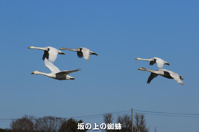 02-EO7D1060-2LR-1-2.jpg