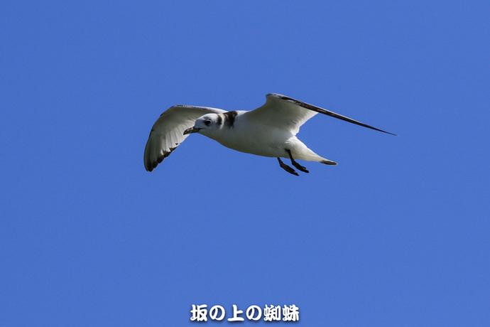 02-EO7D1469-2LR-1.jpg