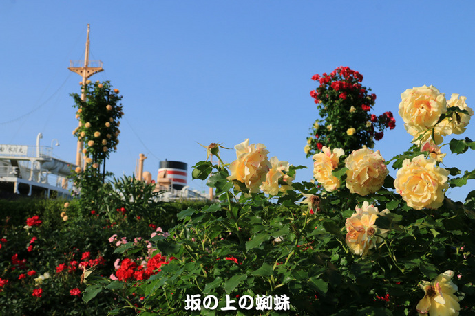 02-IMG_0896-2LR-1.jpg