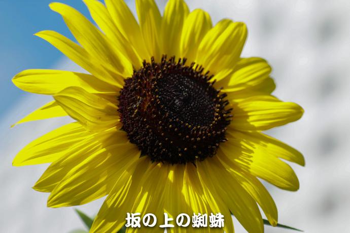 02-IMG_7770-2-LR.jpg