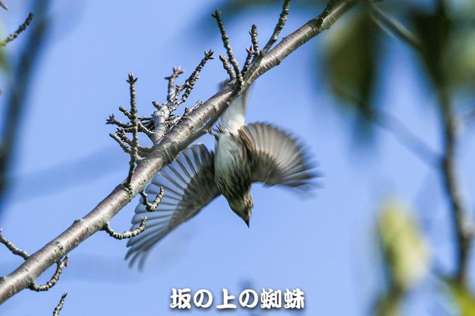03-E1DX4607.jpg
