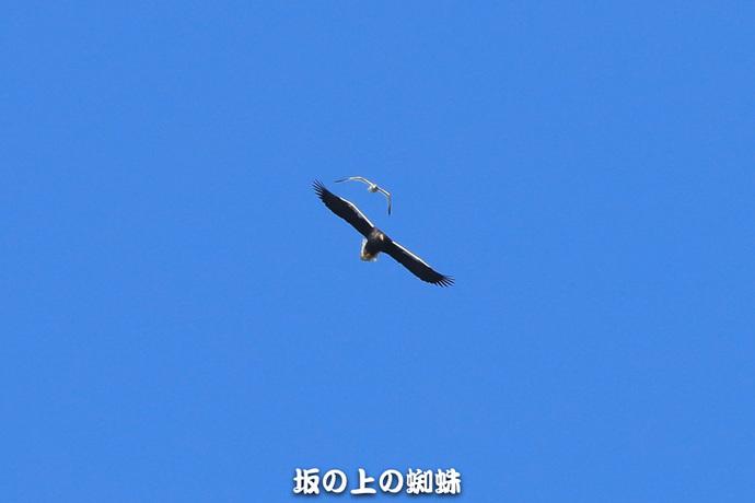 03-E1DX8643.jpg