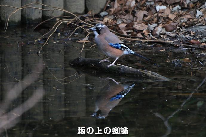 03-E1DX9466-LR.jpg