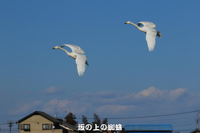 03-EO7D1096-2LR-1.jpg