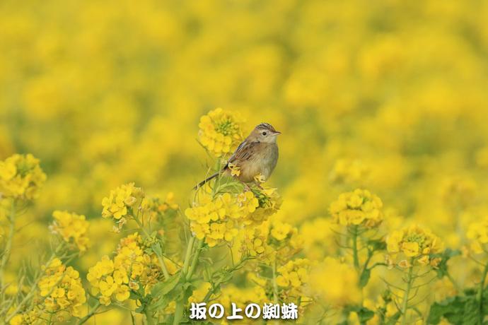 03-EO7D6177-2LR-1.jpg