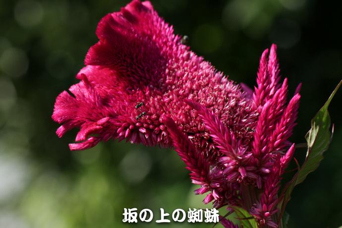 03-IMG_7779-2-LR.jpg